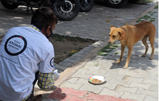 World Animal Protection and NDMC Feed Hundreds of Stray Dogs in Delhi