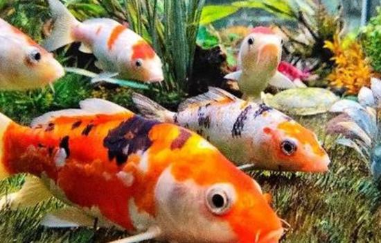 INDIA'S FIRST HITECH FISH AQUARIUM