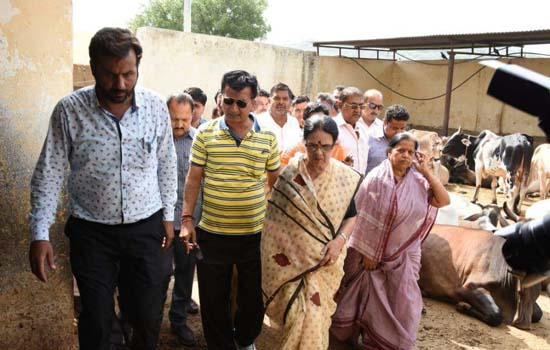 Gau Palan Ministry in state is for politics Dr. Girija Vyas