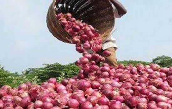 MMTC to import of 11000 MT of Onions from Turkey